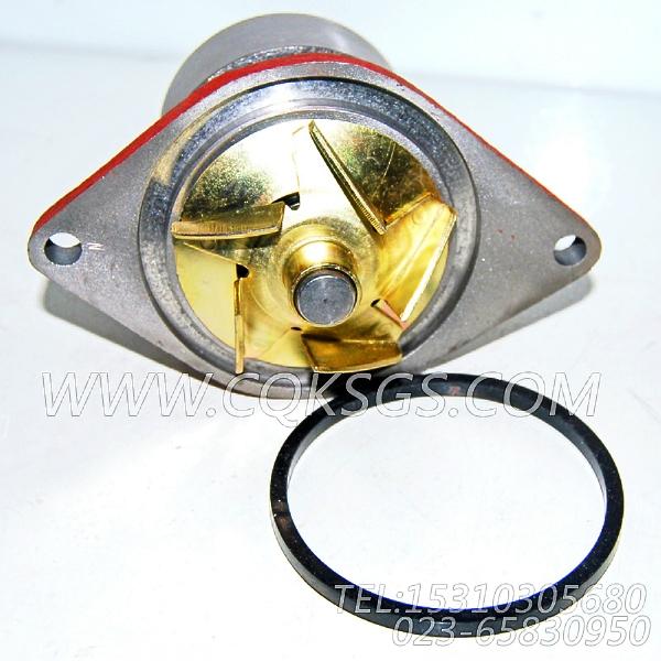 【柴油机4BT3.9-C80的水泵组】 康明斯水泵总成,参数及图片-1