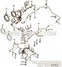 【外螺纹接头】康明斯CUMMINS柴油机的3683993 外螺纹接头