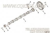 【凸轮轴齿轮】康明斯CUMMINS柴油机的4896380 凸轮轴齿轮